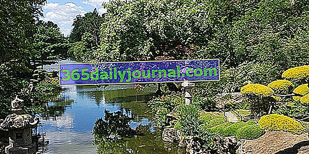 Doğu Parkı ve Maulévrier Japon Bahçesi - Maine-et-Loire (49)