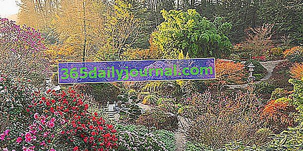 Květinový park Foltière v Horní Bretani (35)