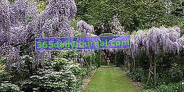 Cvjetni vrt Digeon (80)
