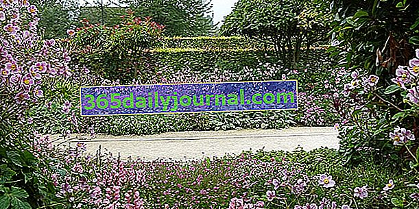 Jardín del museo de los impresionismos Giverny - Eure (27)