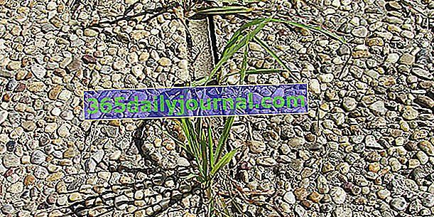 Zrób naturalny i organiczny środek chwastobójczy z wodą, octem i solą
